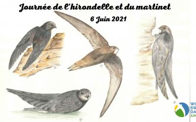 Journée de l'hirondelle et du martinet 6 juin 2021